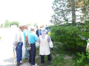 h30樹木4
