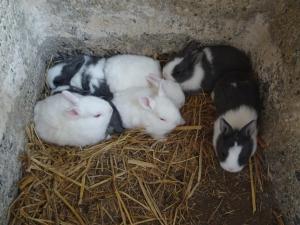 赤ちゃんウサギ01