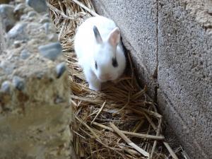 赤ちゃんウサギ02