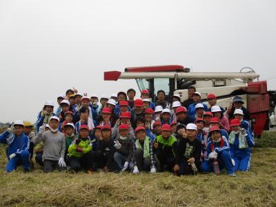 5年稲刈り1