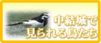 アイコン(5)