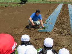 サツマイモ苗植え01