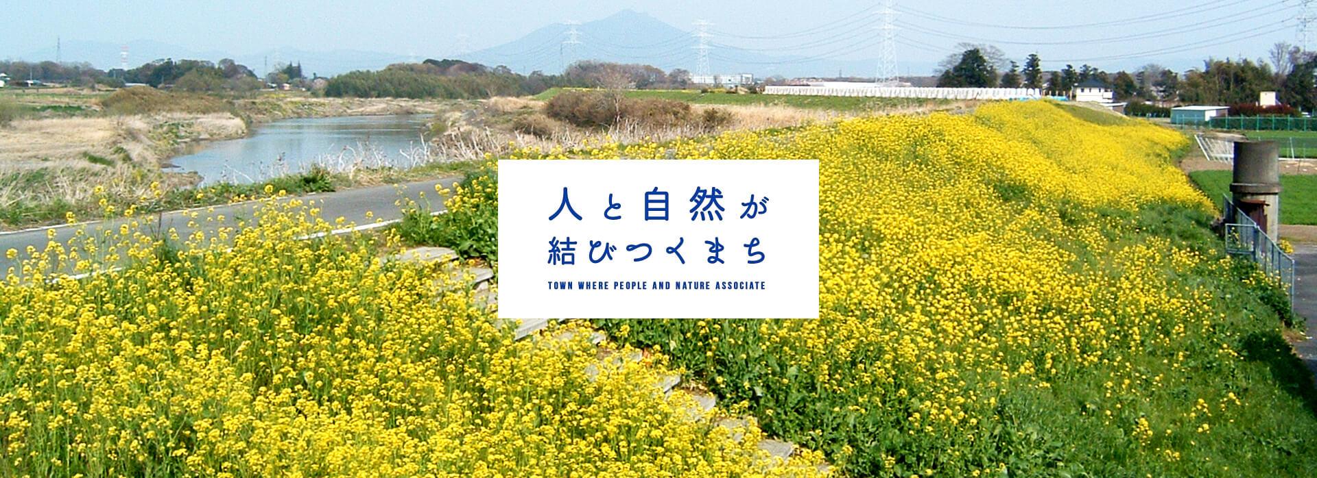 八千代の菜の花