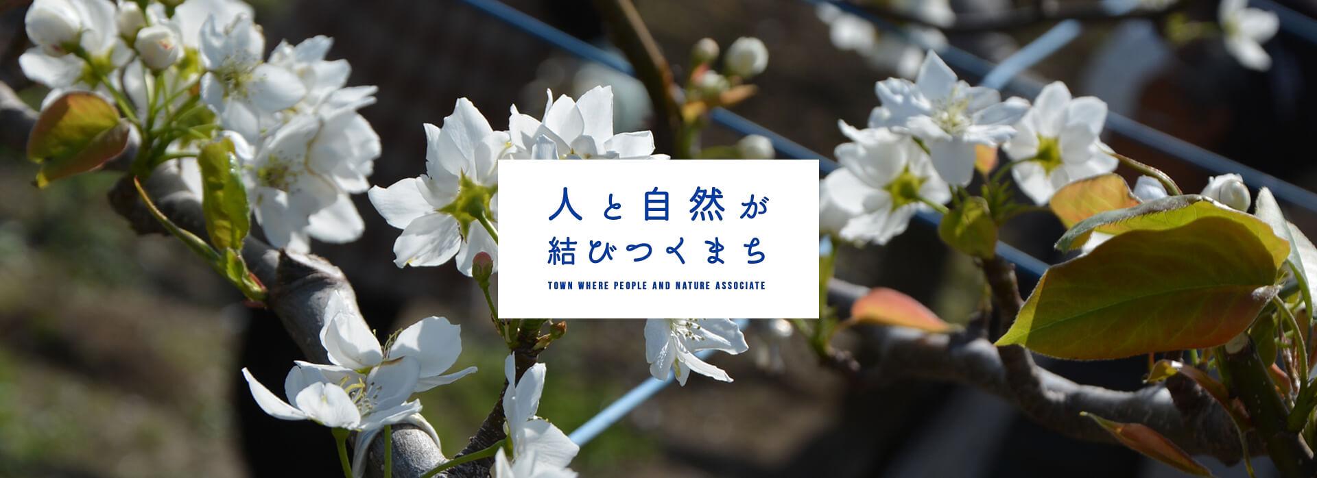 八千代の梨の花